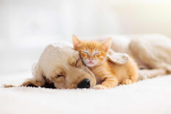 Having pets can bring companionship, love, and enhanced mindfulness.